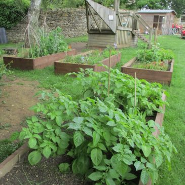 The School Garden – an update!
